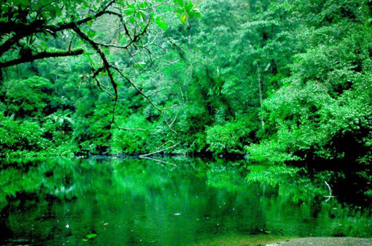 Perpanjangan Moratorium Selamatkan Hutan Indonesia