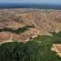 1 Juta Hektare Hutan di Jambi Lenyap 10 Tahun