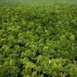 Perjalanan Memahami Hutan di Aliran Sungai Kapuas (4-habis)