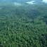 Laporan dari Kapuas: Ekonomi Hijau Di Pedalaman Kalimantan