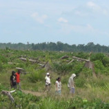 Hutan Papua untuk Masyarakat Internasional