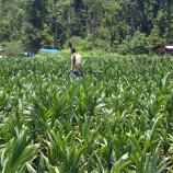 Pelestarian Hutan dan Industri Sawit Dapat Menemukan Solusi Bersama