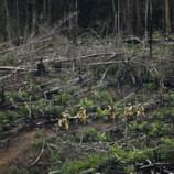 Moratorium Hutan Tak Tutup Lapangan Kerja