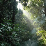 Memperpanjang Moratorium, Menyelamatkan Hutan