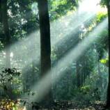 Pelaksanaan Moratorium Hutan Dinilai Akan Dukung Green Economy