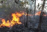 Pencabutan Moratorium Izin Tebang Hutan Ditunda