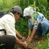 Diusulkan Moratorium Hutan Diperpanjang hingga 2014
