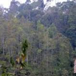 UKP4: Perpanjang Moratorium Hutan hingga 2014