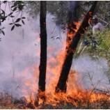 Moratorium Kawasan Hutan Akan Diperpanjang