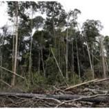 Indonesia Memperpanjang Moratorium Hutan