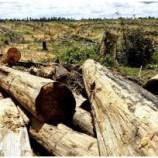 Inpres 6/2013 Memperkuat Moratorium Hutan