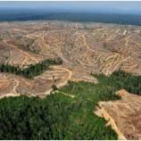 SBY Perpanjang Inpres Moratorium Hutan
