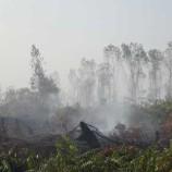 Kebakaran Hutan Sumatera: Pantauan di Kawasan Hutan Tanaman Industri