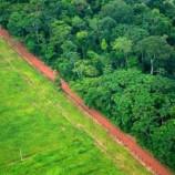 Verifikasi emisi REDD+ dapat diarahkan bagi pendanaan bantuan berbasis hasil