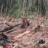 Hutan Batang Toru, Rumah Orangutan yang Terancam Tambang