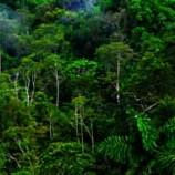 Peningkatan Suhu Bumi Akan Ubah Struktur Ekosistem Hutan Hujan