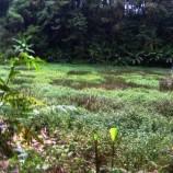 """…Hutan Adat MUARA TAE Mulai di REHABILITASI…"""