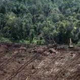 Restorasi Ekosistem Riau Akan Sejahterakan Masyarakat Hutan