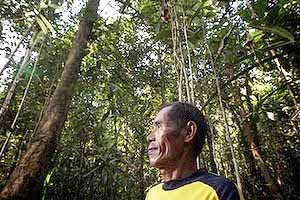 Indonesia's green legacy in peril-3