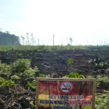 Terkepung Sawit, 500 an Warga Kuala Seumayam Hanya Miliki 3 Hektar Lahan (Bagian 1)