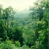 """Masyarakat Sipil Tolak Kebijakan Pembangunan yang Abaikan Penyelamatan Hutan"""""""