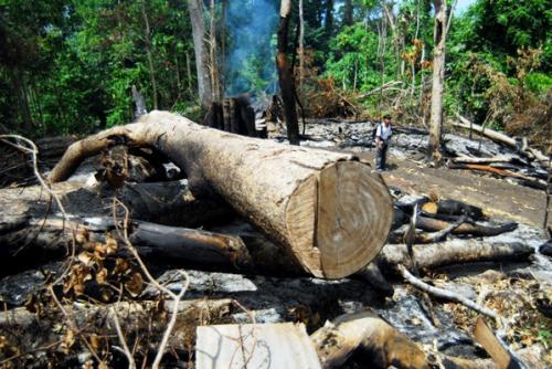ANTARA/Ampelsa Penebangan pohon dalam skala besar terus berlangsung di kawasan hutan Gunung Seulawah, Kecamatan Seulimum, Aceh Besar, Aceh