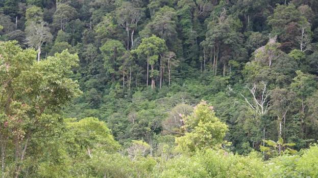 Lahan Hutan Lindung yg diberikan Hkm