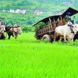 Siaran Pers JKPP: Ruang Hidup Rakyat Pedesaan Dirampas MP3EI