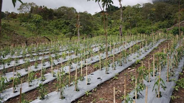 Lahan pertanian masyarakat