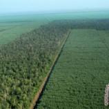 CPI puji Indonesia soal pendanaan perubahan iklim