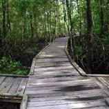 Mengentaskan Kemiskinan di Sekitar Hutan