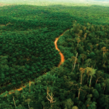 Indonesia's Forest Moratorium: Impacts and Next Steps