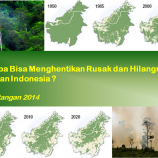 Siapa bisa menghentikan rusak dan hilangnya hutan indonesia?