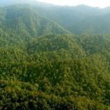 Siaran Pers BP REDD+ : Hutan Nagari Sumatra Barat siap menjalani program REDD+