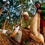 Siaran Pers FPP : Indonesia Gelar International Workshop on Deforestation Drivers and The  Rights of Forest Peoples