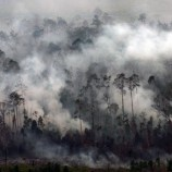Pemerintah Mendatang Diharapkan Peduli Pengelolaan Hutan Masyarakat