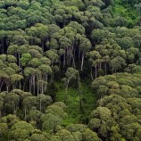 With work still to be done, new govt should continue REDD+ plan