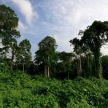 Siaran Pers Seminar Nasional: Indonesia Butuh Presiden Pro Lingkungan dan HAM