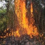 BNPB Pantau Ancaman Kebakaran Hutan