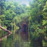Kearifan Lokal Cegah Kehancuran Hutan Jambi