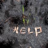 Memperkuat Pelestarian Hutan di Era Indonesia Baru
