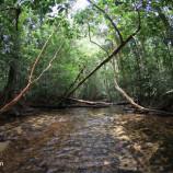 Hutan dan Hak Masyarakat Adat