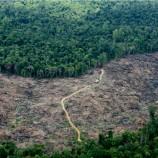 Laju Deforestasi Diklaim Rendah