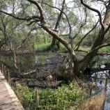 Deforestasi Sasar Kawasan Suaka Alam