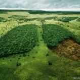 SIARAN PERS : Mekanisme PPH Menjadi Terobosan Percepatan Pengukuhan Kawasan Hutan