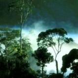 Kata Sambutan Kuntoro Mangkusubroto : Peluncuran Program Nasional Pengakuan dan Perlindungan Masyarakat  Hukum Adat melalui Penurunan Emisi dari Deforestasi dan Degradasi Hutan  dan Lahan Gambut