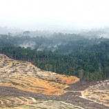 Lahan Gambut: Momentum Perbaikan Tata Kelola Hutan