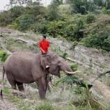 200 Hektar Hutan Tesso Nilo Menjadi Prioritas