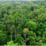 Diskusi TVRI Riau : Mengawal Komitmen Pemerintah Baru Dalam Melestarikan Hutan