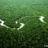 PRESS RELEASE : Presiden Indonesia dibanjiri oleh seruan untuk melindungi Kawasan  Ekosistem Leuser